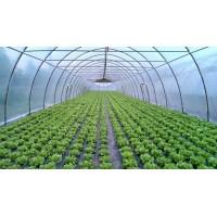 Poza 5 - Hobby greenhouses
