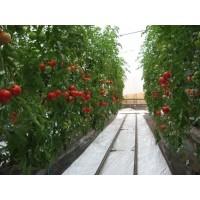 Poza 17 - Hobby greenhouses