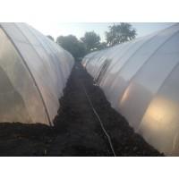 Poza 21 - Hobby greenhouses