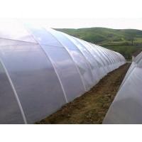 Poza 23 - Hobby greenhouses