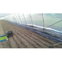 Poza 25 - Hobby greenhouses