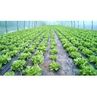Poza 26 - Hobby greenhouses