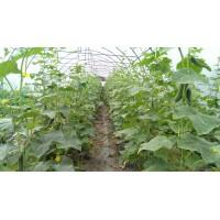 Poza 27 - Hobby greenhouses