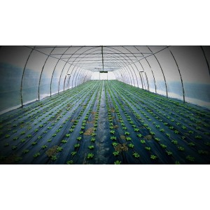 - Greenhouse for vegetables or flowers