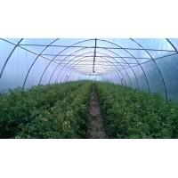 Poza 4 - Solarii legume sau flori