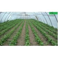 Poza 15 - Solarii legume sau flori