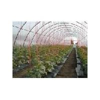 Poza 16 - Solarii legume sau flori