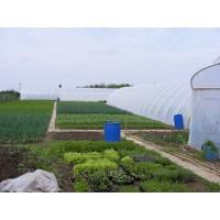 Poza 20 - Solarii legume sau flori