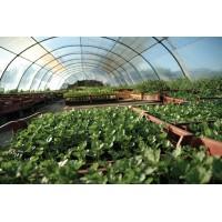 Poza 28 - Solarii legume sau flori