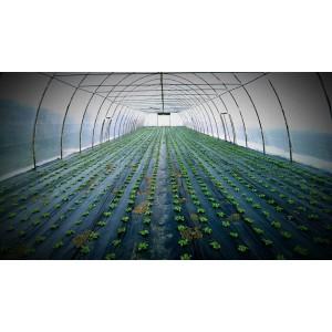 - Solarii legume sau flori